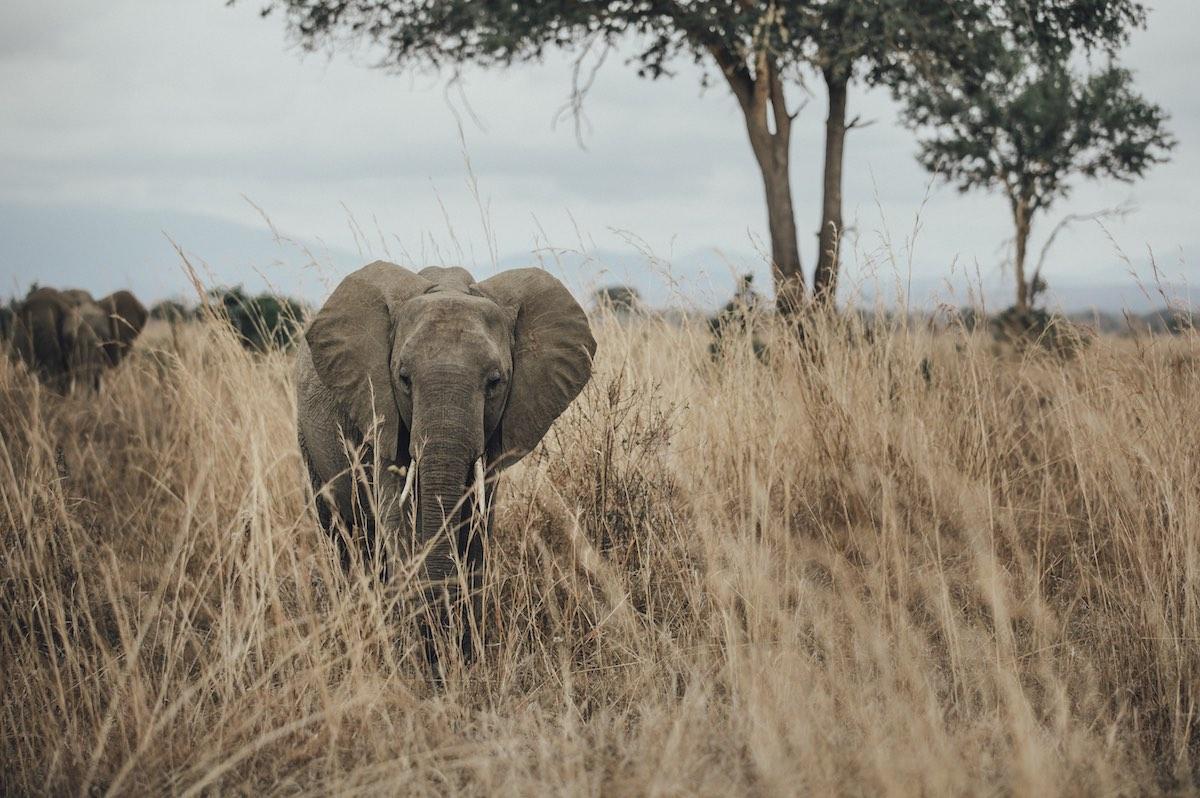 safarilla tansaniassa