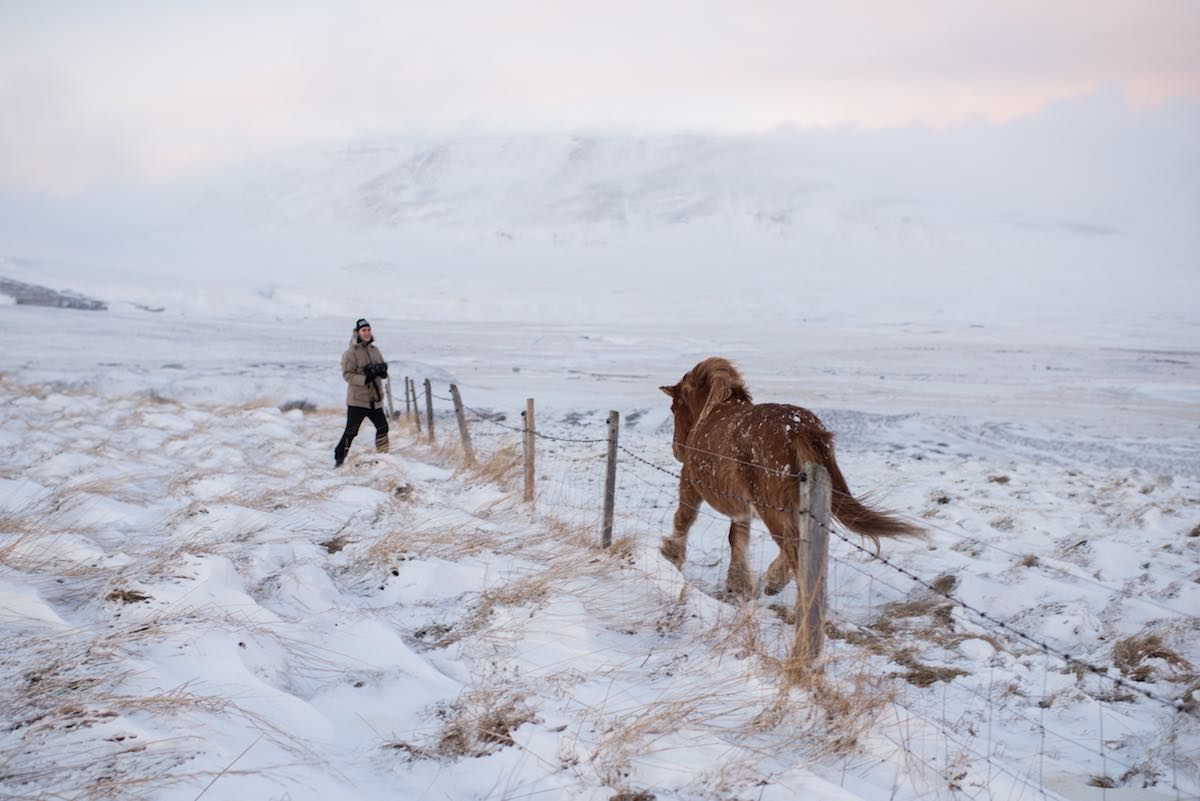 Islanninhevonen tölttää kuvaajan luo, Hvitserkur - Camera: Nikon D810, Lens (mm): 35, ISO: 64, Aperture: 2, Shutter: 1/160